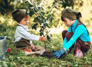 Postaw-na-organiczny-ogród
