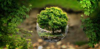 dźwięki natury, natura, relaks, odpoczynek, świadomość, slow, slow life