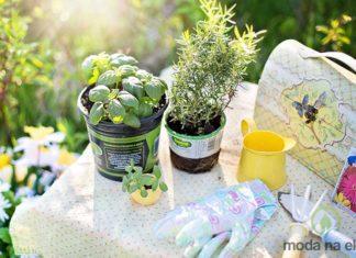 żywność, jedzenie, ogród, ogródek, świeże, dom
