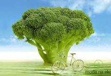 jelita, zdrowie, organy, trawienie, długowieczność