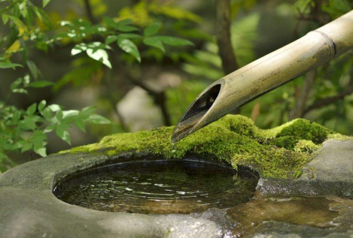 ogród, ekologia