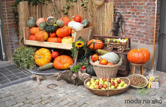 dynia owoc jesieni