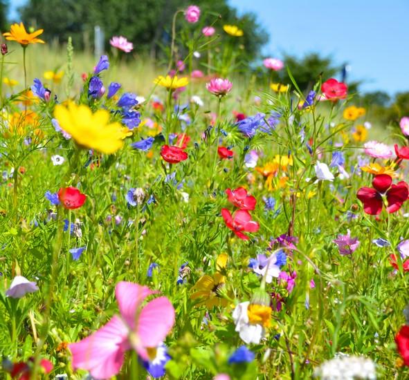 kwiaty bacha