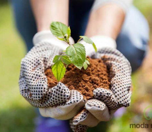 ekologiczny ogród