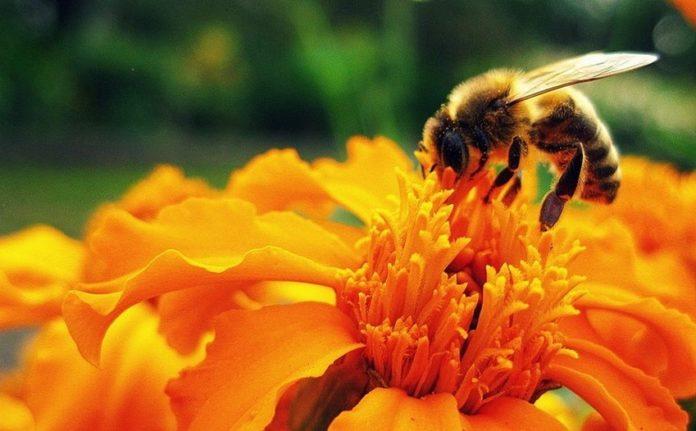 pyłek pszczeli jako superfood