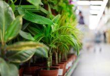 rośliny domowe poprawiają jakość powietrza