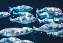 plastik zamiast planktonu