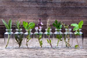 zioła ziołolecznictwo