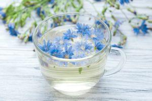 napar z kwiatów cykorii